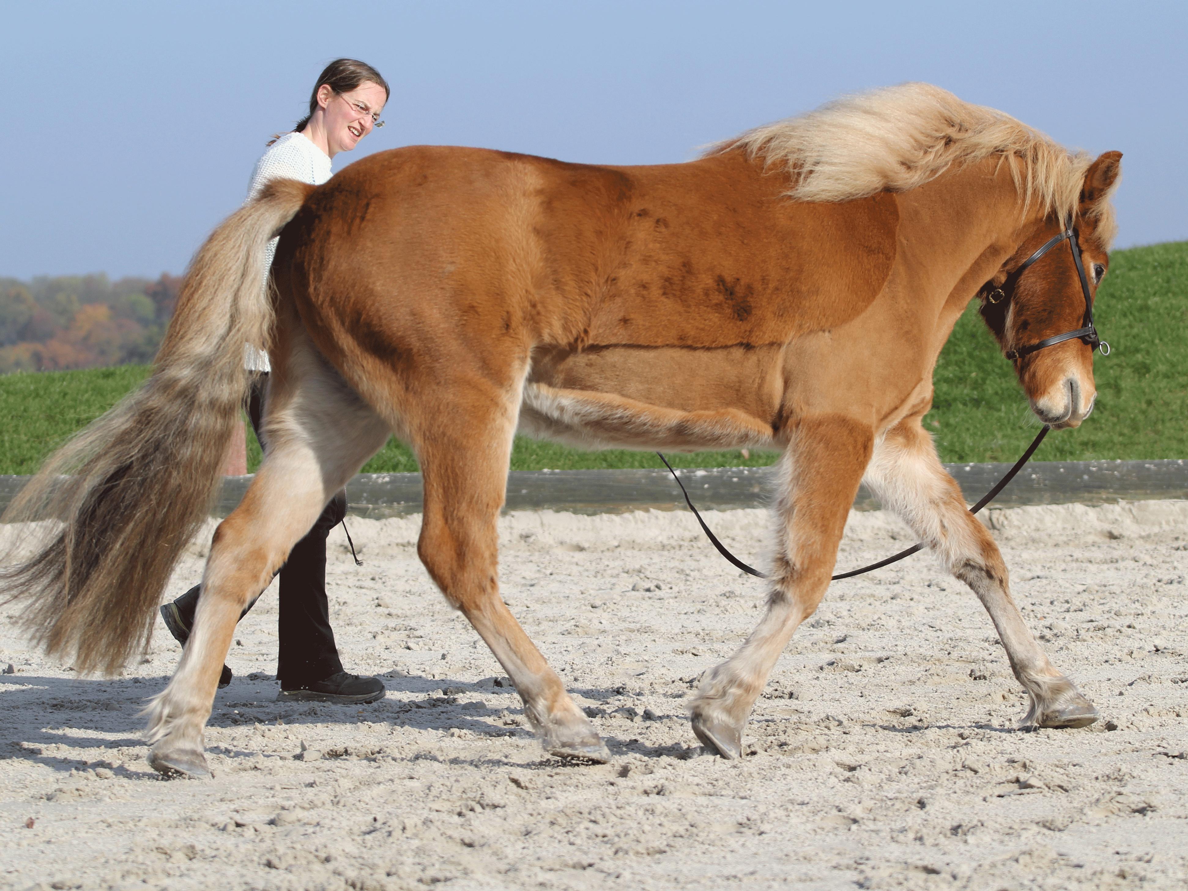 gelassenes pferd im gelände